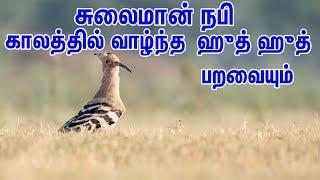சுலைமான் நபியும் ஹுத் ஹுத் பறவையும் | Tamil Quran Tv | Tamil Bayan