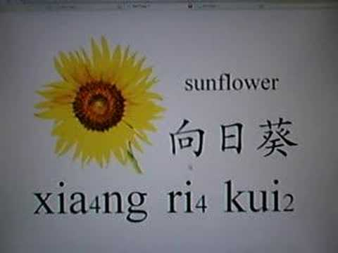 Learn Chinese - flowers