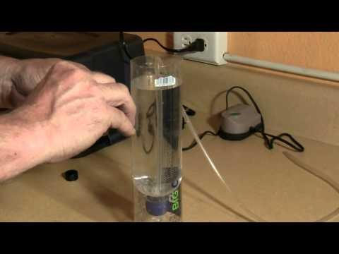 Build a Brine Shrimp Hatchery