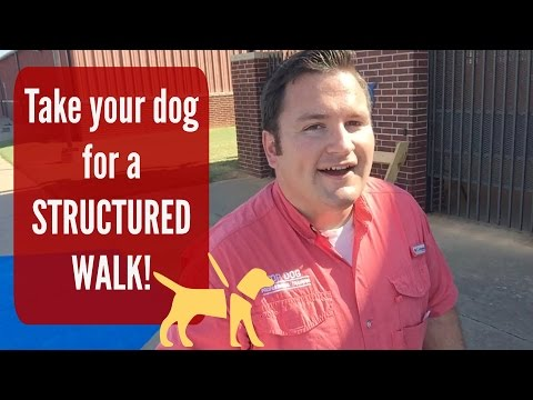 Walk your Dog!   With Structure! A solution to many dog problems.