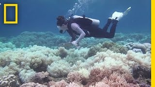 The Great Barrier Reef May Be Dying Faster Than We Thought   National Geographic