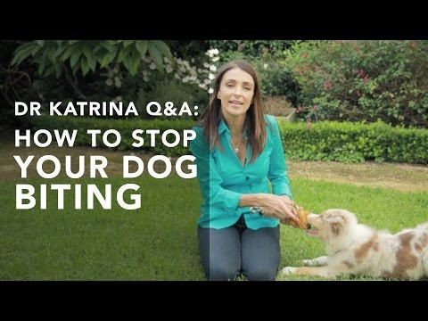 How to stop my puppy from biting me? Q&A's with Dr Katrina
