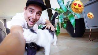 Ich bekomme eine Katze!😍