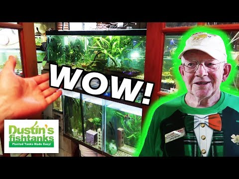 FISH ROOM OF A LEGEND: My Favorite 77 Year old FISHTANK MASTER Larry Brown (2018)