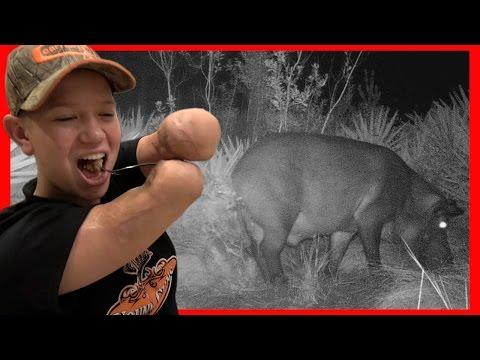 Wild Pig Backstrap with hand cut Cracklins! Deer Meat For Dinner!!