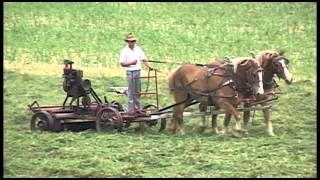 Amish Survive clip