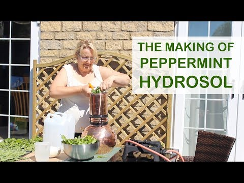 Making of Peppermint Hydrosol – Distilling in Copper Still