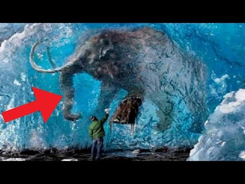 Animals Found FROZEN In Ice!