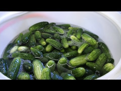 A Few Key Things to Know About Pickles & Cucumbers