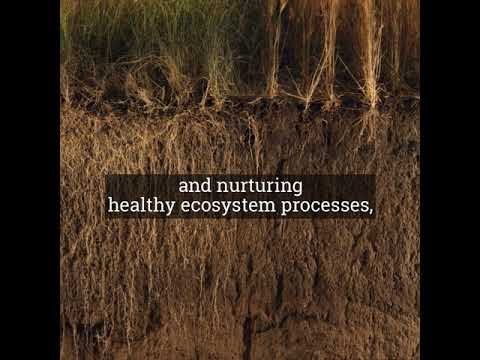 How to Improve Soil Health in 60 Seconds