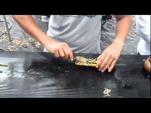 How to Clean a Lobster Fast and Easy