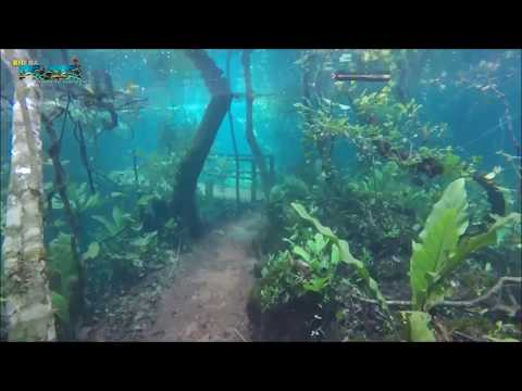 Brazilian Forest Flooded in Crystal Clear Water