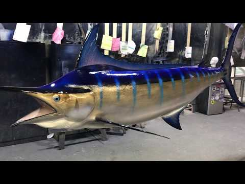 153 inch Blue Marlin Ceiling mount from Gray Taxidermy