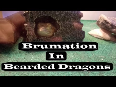Brumation   Signs & Tips