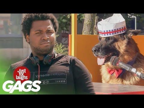 Xxx Mp4 Dog Sells Hot Dogs 3gp Sex