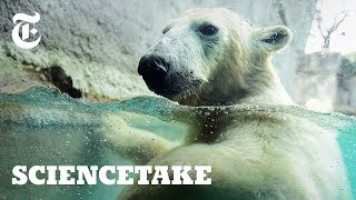 See Life Through the Eyes of a Polar Bear   ScienceTake
