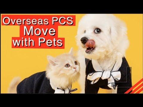 Military PCS Overseas  MOVE with Pets (KOREA, JAPAN, HAWAII)