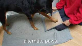 Is Your Dog Scared Of Having His Toes Nails Cut Clipped Dremelled