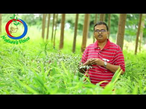 ZBNF | How to Enrich Carbon Content of Soil (English) | Sharath Pendekanti-6