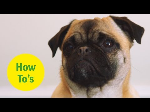 How to stop your puppy nipping, mouthing and biting