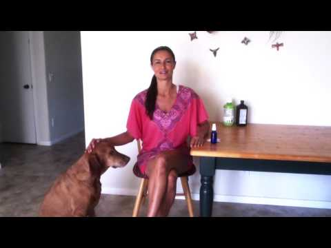 Dog Plaque Teeth Cleaning Solution