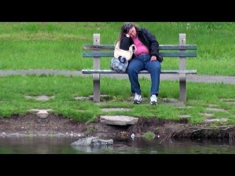 Remote Control Alligator Hidden Camera Practical Joke