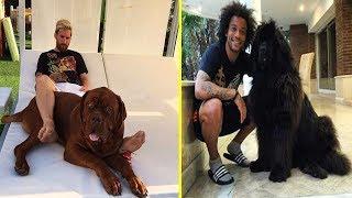 Futbolistas Famosos y Sus Perros ● Famous Footballers And Their Dogs