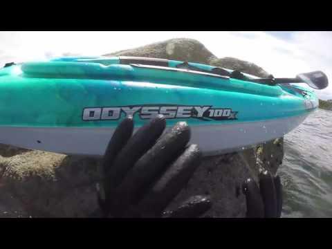 pt holmes kayak snorkel may 2016