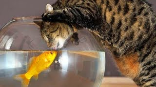 Funny Cats and Fish 😻🐠  Cats Playing With Fish [Funny Pets]