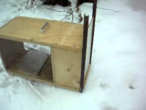 How to make a homemade box trap