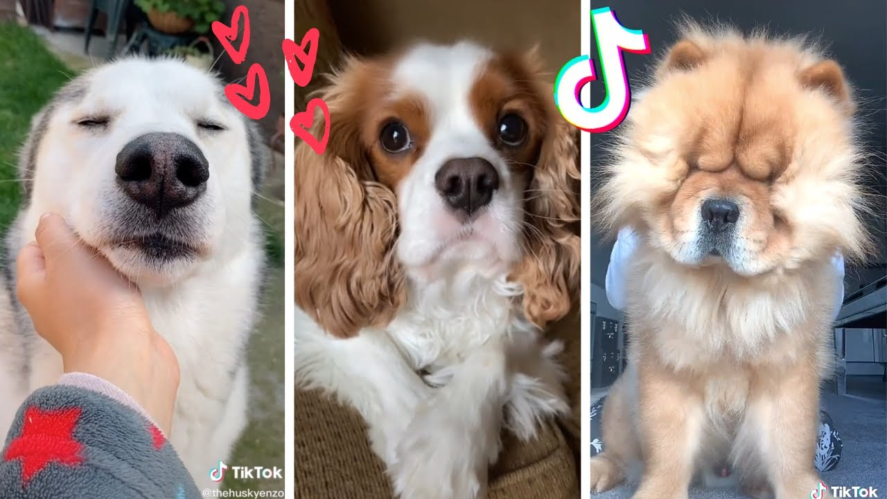 The Funniest Dogs on TikTok to Brighten up your Mood ~ Adorable Puppies 🥰