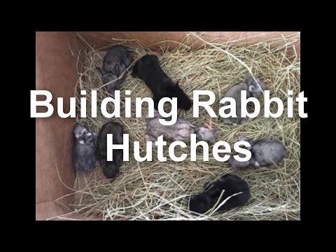 Building Rabbit Hutches for Giant Flemish Rabbits