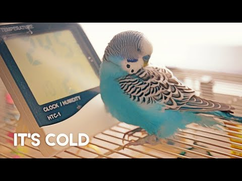 How to Keep a Budgie's Cage Warm
