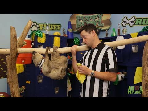 There's A New Referee At Puppy Bowl XIV