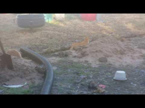 Crazy cats video