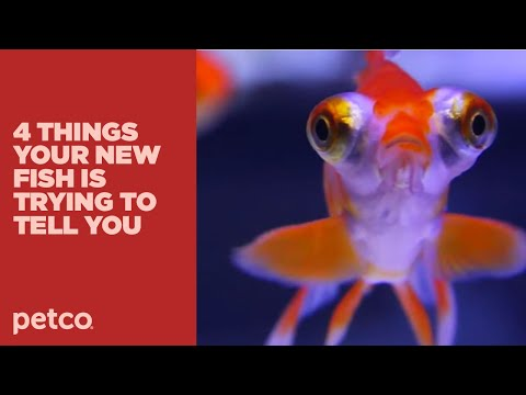 4 Things Your New Fish is Trying to Tell You: New Pet Tips by Petco