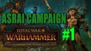 total war warhammer wood elves gameplay Videos - 9tube tv