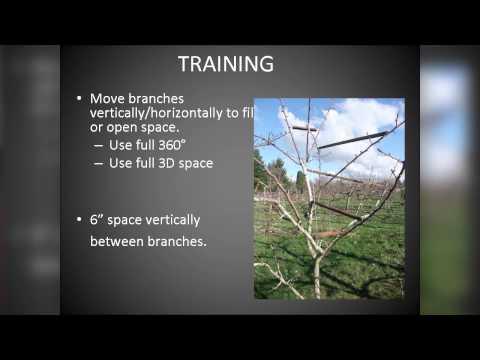 OSU Master Gardener: Pruning Fruit Trees