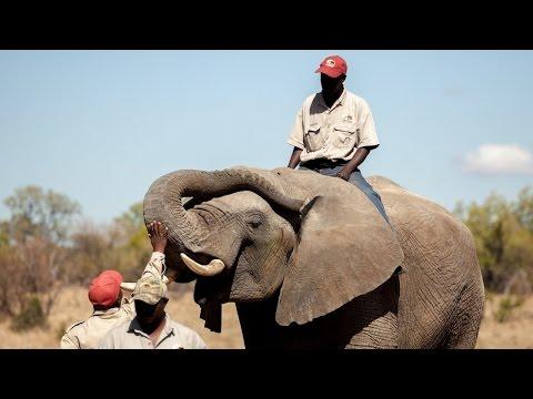 Detector Elephants: Gentle Giants Ride !