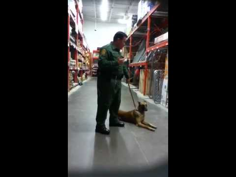 Police Dog Sniffs Out Drugs In Home Depot