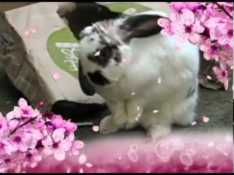 Iddy Biddy the Holland Lops Shows you How to Clean Your Ears Like a Lady