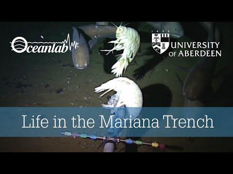 Cientistas filmam peixes a 8 km de profundidade na Fossa das Marianas