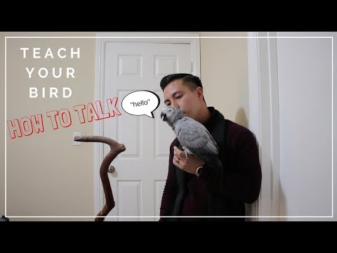 Training Your Parrot to Talk
