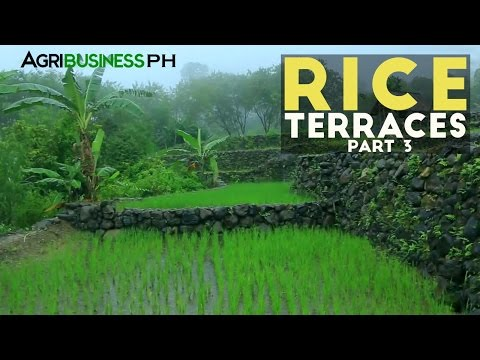 Rice Terraces Part 3 : How to build Rice Terraces | Agribusiness Philippines