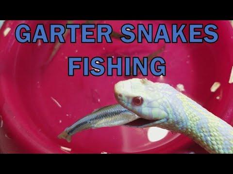 Feed My Pet Friday: Garter Snakes!