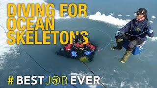 Diving Deep Below Arctic Ice to Bring Back Our Ocean's Skeletons: #bestjobever