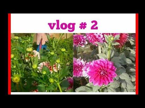 सुबह की सैर।🐝🌳🌴🌹🌻🌿🍁🐤 Nature  Walk Vlog - 2  / Home Town Clips / Chit -Chat / Rubis Recipes