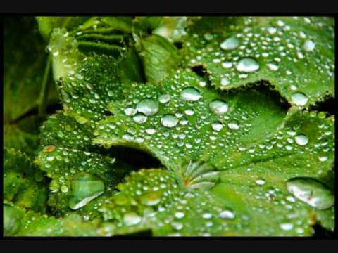 Xxx Mp4 Frédéric Chopin S Raindrop Prelude Op 28 No 15 3gp Sex