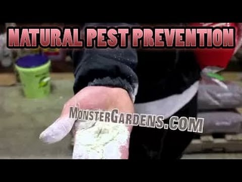 Kill Broad Mites, Aphids, Thrips, Spider Mites, Natural Pest Prevention in Garden Diatomaceous Earth