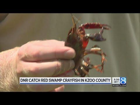 DNR catch crayfish in Kalamazoo County